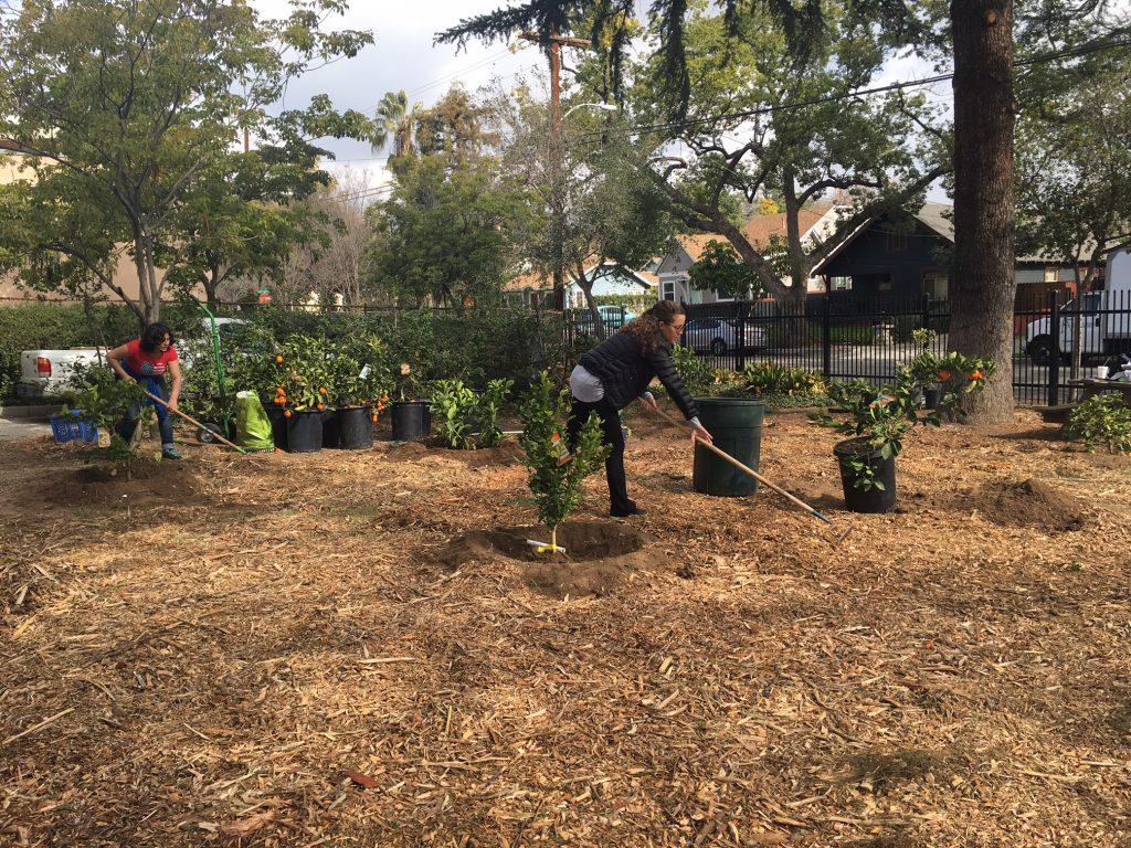 School Community Gardens – Pasadena Educational Foundation